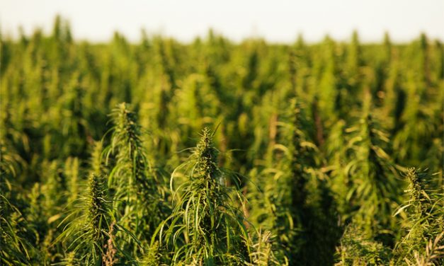 Florida Lawmakers Advance Industrial Hemp Bill