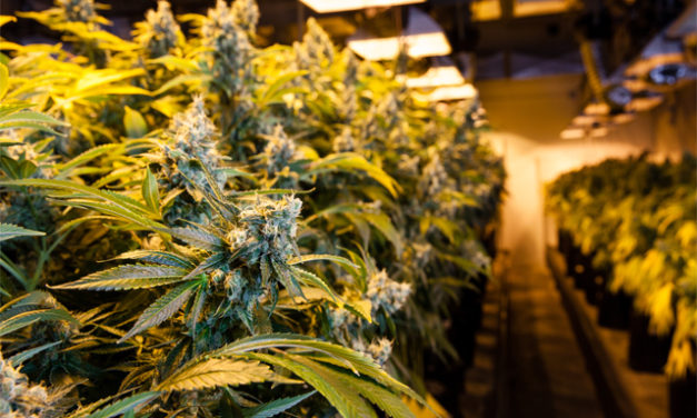 Federal Bill Would Provide New Protections for Legal Cannabis